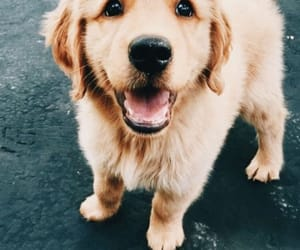dog, cute, and animal image
