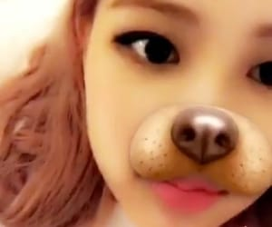 rose, park chaeyoung, and blackpink image