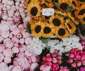 flowers, rose, and sunflowers image