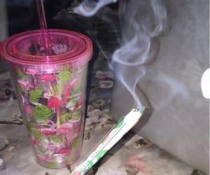flamingo, legalize, and pls image