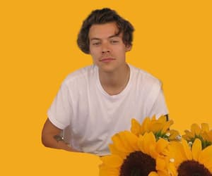 aesthetic, styles, and sunflower image