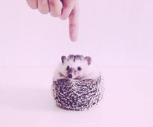 adorable, finger, and pet image