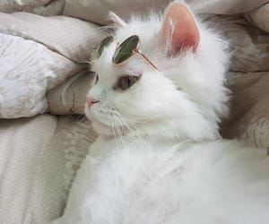 beautiful, cat, and glasses image
