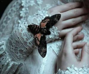 pale, butterfly, and fantasy image