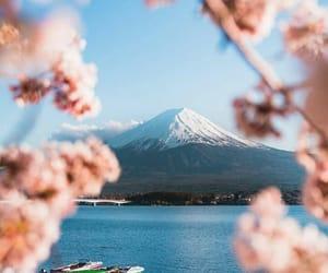 cherry tree, japan, and lake image