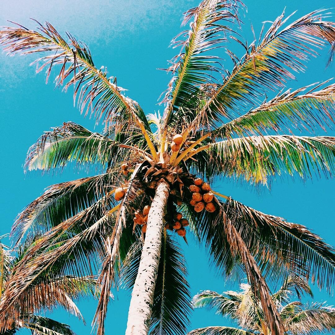 beach, palm trees, and palm image