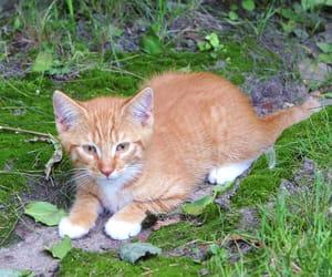 animal, baby, and kitten image