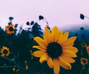 flowers, girasoles, and love image