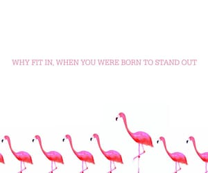 flamingo, unique, and words image