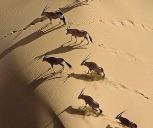 Animales, dunas, and naturaleza image