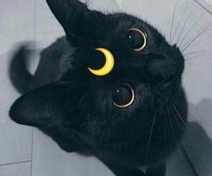 animal, pretty, and black image