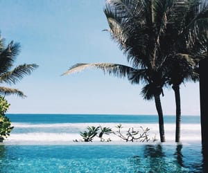aesthetic, beach, and palm trees image