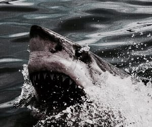 theme, rp, and shark image