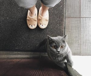 cat, cats, and russian blue cat image