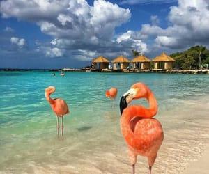 flamingo, beach, and travel image