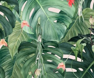 leaves, summer, and tropical image