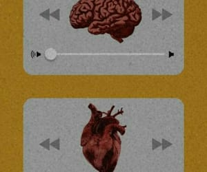heart, wallpaper, and brain image
