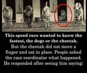 cheetah, determination, and success image