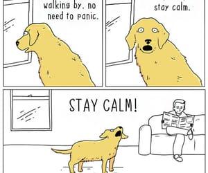 dog, dogs, and humor image
