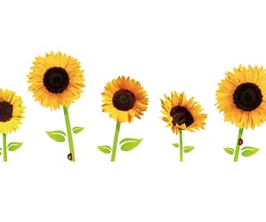 flowers, header, and headers image