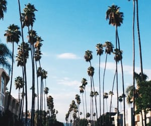california, palm trees, and los angeles image
