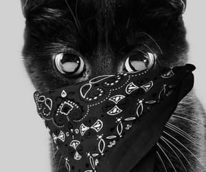cats and blackcats image