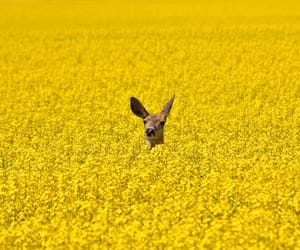 yellow, deer, and nature image