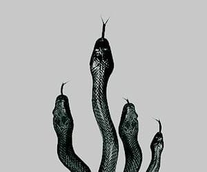 snake, slytherin, and aesthetic image