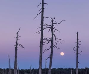 dawn, moon, and forest image