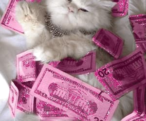 babe, cat, and pink image