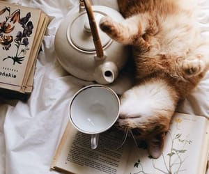 cat, book, and tea image
