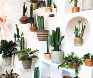 cactus, plantas, and plants image