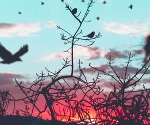 bird, sky, and beautiful image