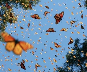 butterfly, nature, and sky image