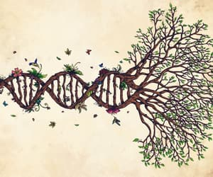 beauty, DNA, and life image