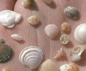 shell, aesthetic, and beach image