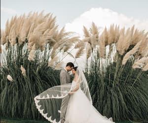 boda, trigo, and casamiento image