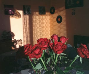 red, room, and roses image