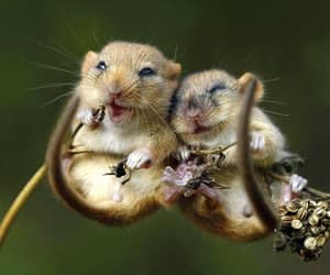 cute, animal, and mouse image