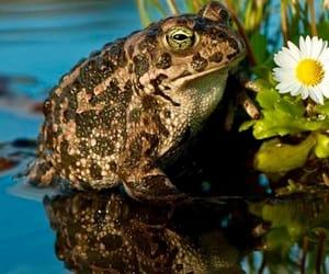 Animales, naturaleza, and sapo image