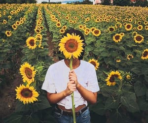 beautiful, 🌻, and girl image