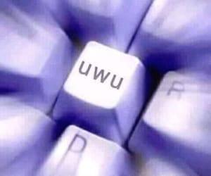 meme, uwü, and reaction image