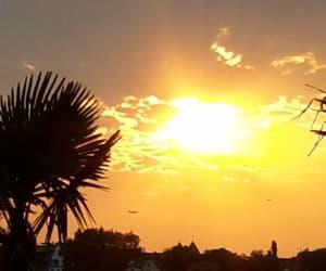 palmtree, sundown, and sunrise image