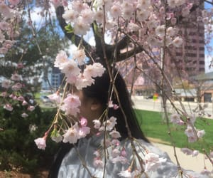 asian, blossoms, and buildings image