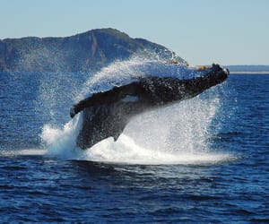 Cabo, loscabos, and whalewatching image