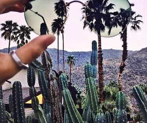 cactus, glasses, and green image
