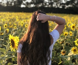 aesthetic, yellow, and sunflower image