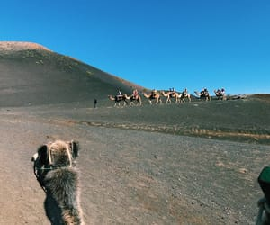 animals, blue skies, and culture image