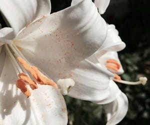 flowers, whit, and white image