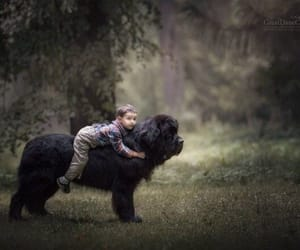 adorable, boy, and dogs image